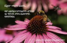 Spring flowers, buzzing bees, and. Find out how to keep your pollinator garden free of bee- and butterfly-killing neonicotinoids. How To Kill Bees, Mason Bees, Growing Gardens, Birds And The Bees, Parts Of A Plant, Garden Club, Plant Nursery, Save The Bees, Garden Pests