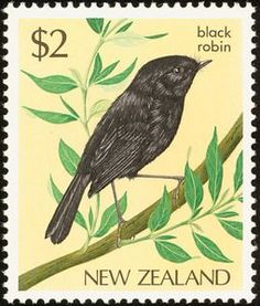 Black Robin (Miro traversi)