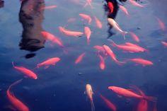 Feeding The Fish
