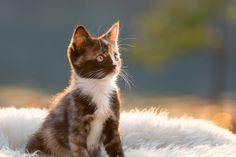 Selda - null Cats, Pictures, Animals, Photos, Gatos, Animales, Animaux, Animal, Cat