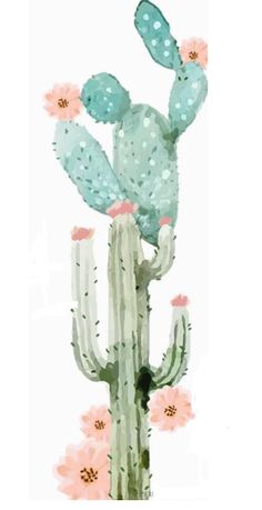 cactus watercolor // Sonia cavallini illustration