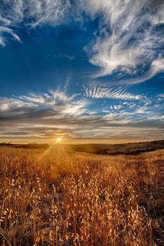 ✮ Golden Sunset over a field of grasses in wine country Temecula, California