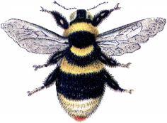 Marvelous Bumblebee Clip Art Image! - The Graphics Fairy
