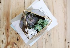 These geometric faceted terrariums are great for showcasing air plants, succulents, or cacti.