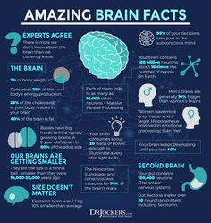Brain Anatomy, Anatomy And Physiology, Human Body Facts, Brain Facts, Endocannabinoid System, Brain Science, Brain Health, Healthy Brain, Psychology Facts