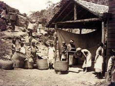 Bringing_in_the_tea_leaf,_Darjeeling,_1890.....Lady Julia Grey...Deanna Raybourn
