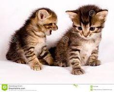 Resultado de imagen para gatos lindos fotos