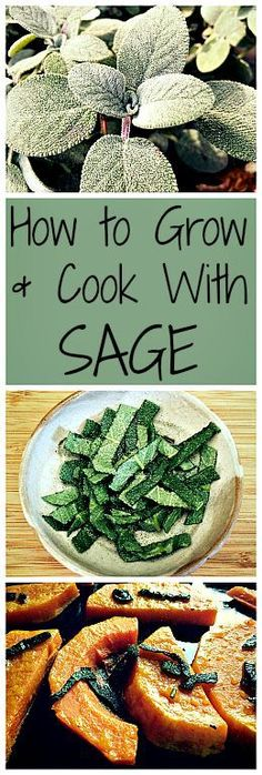 to Grow and Cook with Sage The perfect fall herb, sage is easy to grow and wonderful to cook with!The perfect fall herb, sage is easy to grow and wonderful to cook with! Healing Herbs, Medicinal Plants, Vertical Herb Gardens, Herb Gardening, Herbs Garden, Planting, Organic Gardening, Kitchen Gardening, Kitchen Herbs