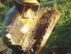 Can you remove a hive without hurting the bees? | Angie's List