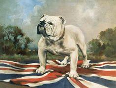 English School - British Bulldog