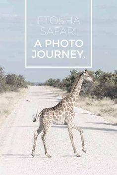 Etosha National Park Safari - wildlife photography tips from Etosha, where to sleep and getting around Etosha, Etosha practical tips. #Namibia #Africa #NamibiaHorizons