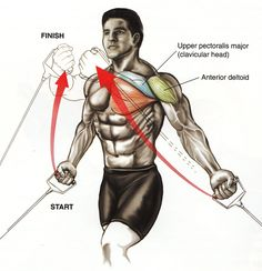 Upper Chest Anatomy