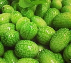The Health Benefits of Cucamelon Fruit
