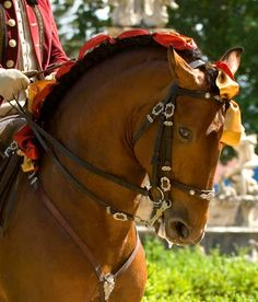 Lusitano horse - from The Portuguese School of Equestrian Art in Alter do Chao, Portugal