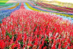 上富良野Flower Land