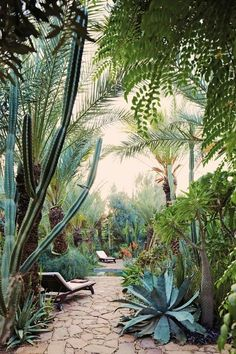 A backyard in a desert region made to be a cactus and succulent sanctuary; nothing to mow, and everything thrives in an arid environment yet looks lush and green.