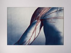 Complex Structures - Patrick Hickley  Hand printed cyanotypes on watercolour paper, with thread hand stitched over top.