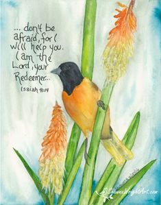 Bible quote watercolor bird painting by Shawna Wright faith, comfort, Isaiah Bible Verse Art, Bible Verses Quotes, Bible Scriptures, Wisdom Quotes, Faith Quotes, Christian Art, Christian Quotes, Bibel Journal, Bible Promises