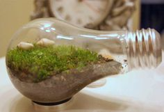 How to make your own light bulb terrarium :)