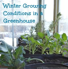 Winter growing is not the same as winter harvesting. There are several winter growing conditions in a greenhouse that need to be met to be able to grow.