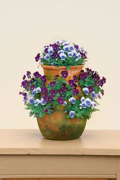 Purple Violas in Container