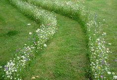 mayaproject.org & seedball.co.uk ♡ wildflower path
