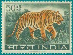 SG # 475 (1963), Royal Bengal Tiger http://www.indiapicks.com/stamps/Nature_Fauna/NAN_Animals_Main.htm