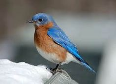 Brilliant Colorful Birds - Looksafe Yahoo Image Search Results