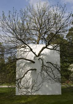 """Wall in Blue Ash Tree"", 2011, installed at the Morton Arboretum, Lisle, IL. by Letha Wilson"