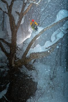 Zack Giffin in the trees, Myoko Japan