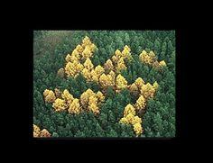 Una esvástica oculta en el bosque: http://www.muyinteresante.es/historia/preguntas-respuestas/cual-fue-la-esvastica-mas-oculta-831418635530 ¿dónde se encontraba? ¿Continúa allí? #hitler #nazis