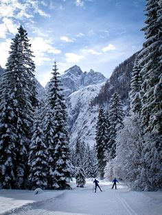 (Cross-country) skiing in Kranjska Gora, Slovenia. Found out I'm not so much of a wintersports-person, but I do enjoy the snow (as long as I do not have to be anywhere)