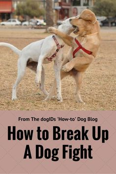 Pitbull Training, Puppies Tips, Dog Fighting, Dog Id, Dog Park, Beautiful Dogs, Puppy Love, Animals And Pets, Breakup