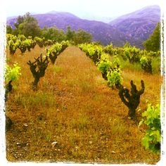 Grapes Vineyard, Country Roads, France, Mountains, Nature, Travel, Outdoor, Viajes, Outdoors