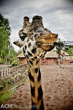 Great spots around the world to get up close with animals
