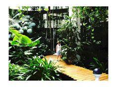 ผลการค้นหารูปภาพโดย Google สำหรับhttp://cache.virtualtourist.com/4/2714088-Indoor_garden_Salina_Melia_Hotel_Costa_Teguise_Isla_de_Lanzarote.jpg