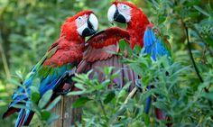 19 Awe Inspiring Bird Photos see more at http://www.theenvironmentalblog.org/2012/09/awe-inspiring-bird-photos/