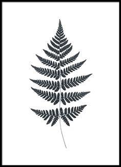 Kleines Schwarz-Weiß-Poster mit Farn.