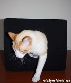 An easy DIY Cat T-shirt House that you can make in 5 minutes. For more DIY projects for cat lovers visit http://catladyconfidential.com/