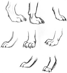 Wolf Study- feet by wolfsilvermoon