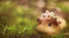 #hamster