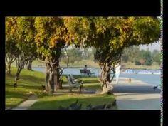 """DOCUMENTAL 'LAS 7 LEYES ESPIRITUALES DEL EXITO"""" de Deepak Chopra COMPLETO Y ESPAÑOL - YouTube"""