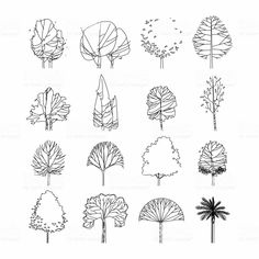 Side view, set of graphics trees elements outline symbol for architecture and landscape design drawing. Vector illustration royalty-free side view set of graphics trees elements outline symbol for architecture and landscape design drawing vector illustration stock vector art & more images of acacia tree