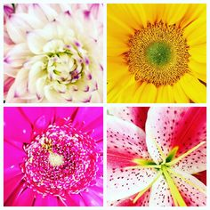 Dahlias, Daisies, Sunflowers or Stargazers.. which one is your favorite?