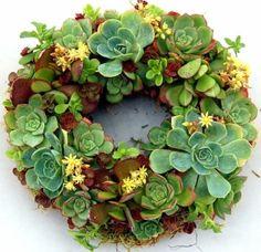 succulent wreath....want this on my front door.