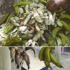 > #Jaraguenses para hacer una parranda solo hay que compartir un poco de jaibas tilapias cocos y víveres  - La risa viene viene por añadidura
