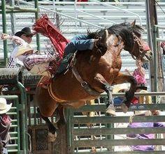 Cowboy Bebop, Cowboy Hats, Cowboy Font, Cowboy Artwork, Hat Holder, Rodeo Life, Horse Pictures, Western Art, Cattle