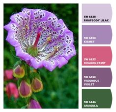 Paint colors from Chip It! by Sherwin-Williams Unusual Flowers, Unusual Plants, Rare Flowers, Exotic Plants, Amazing Flowers, Purple Flowers, Beautiful Flowers, Beautiful Gorgeous, Flowers Pics