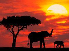 elephants in kenya at sunrise. im coming baby ele!!