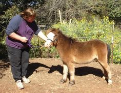 Natural Training Methods for the Miniature Horse
